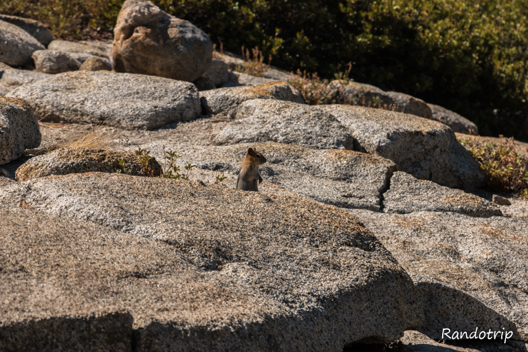 Un chipmunk à Olmsted Point à Yosemite