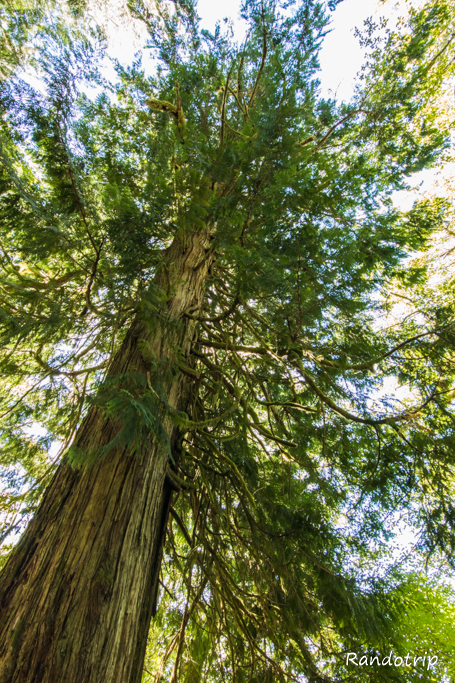 Un arbre à Olympic National Park dans l'Etat de Washington
