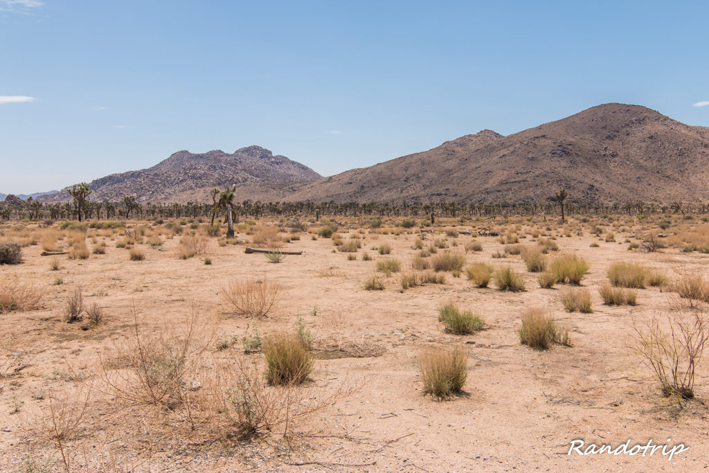 Visite de Joshua Tree National Park en Californie
