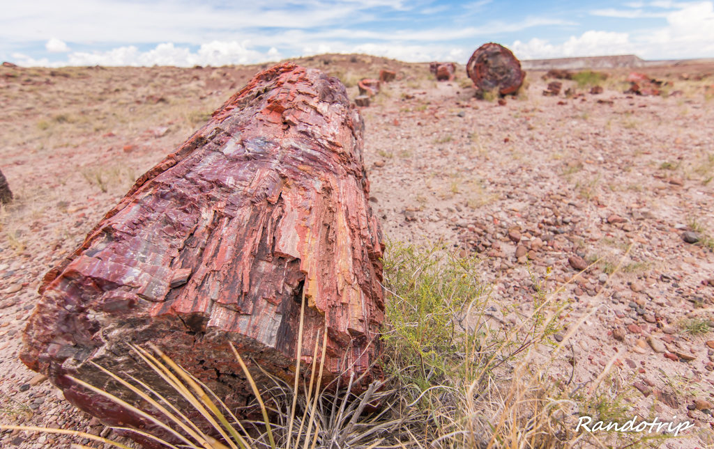 Le Giant Logs Trail à Petrified Forest National Park dans l'Arizona