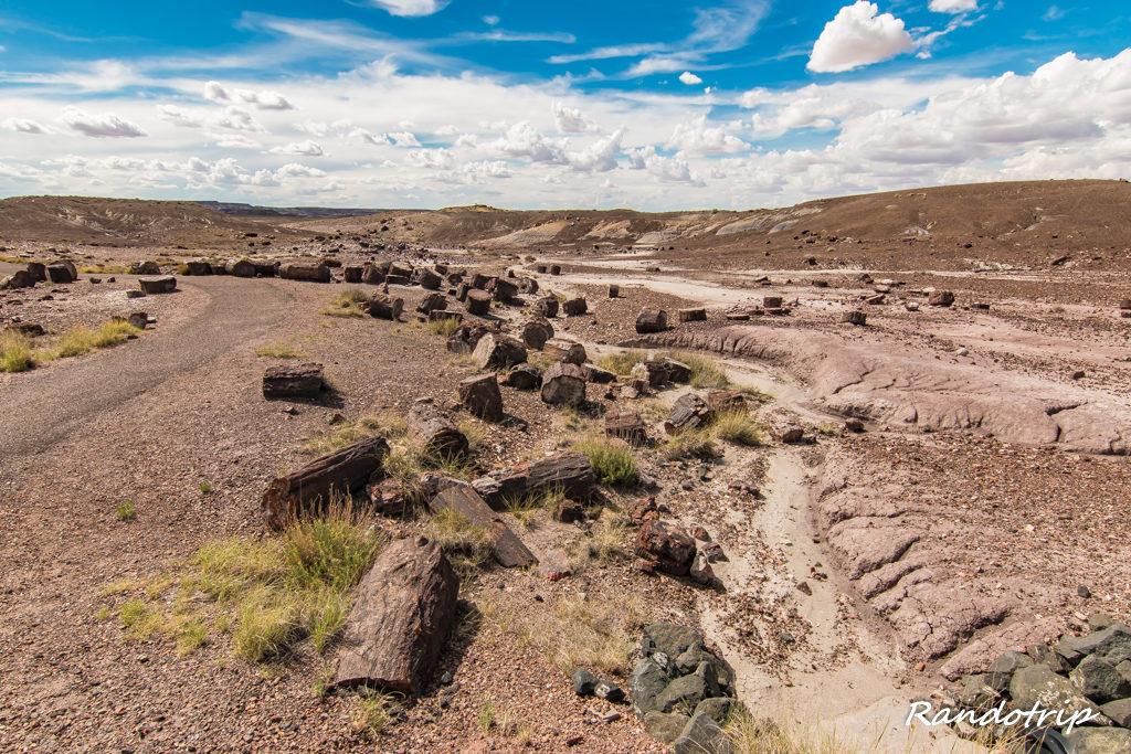 Le Long Logs Trail à Petrified Forest National Park dans l'Arizona
