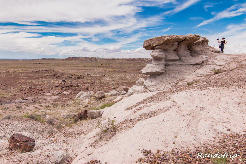 Panorama sur Petrified Forest National Park dans l'Arizona